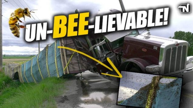 Truck Crash full of Bees in Montana