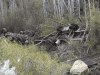 Trucker Loses Life After Plunging Into Wyoming Ravine