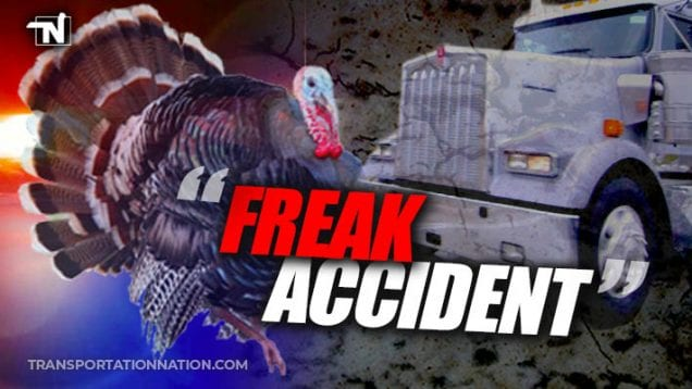 Freak Accident – Turkey Hits Big Rig and Kills Motorcyclist