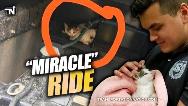 Miracle Ride – Kitten Hitches a Ride on a Big Rig