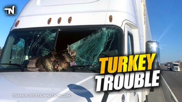 turkey crash