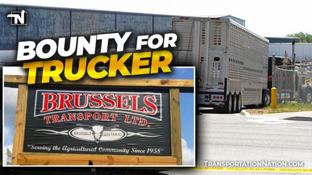 Bounty for Trucker